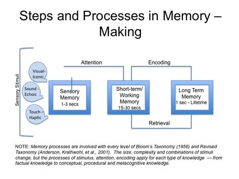 Memory Wstor the multi store model atkinson shiffrin 1968 components and processes learning