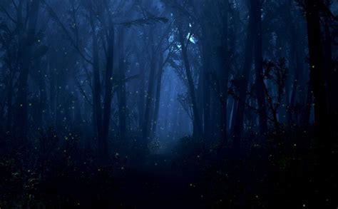 forest  night pictures weneedfun