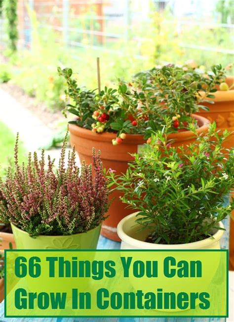 4 plants you can grow today to keep mosquitoes away the 359 best outdoor flower container ideas images on