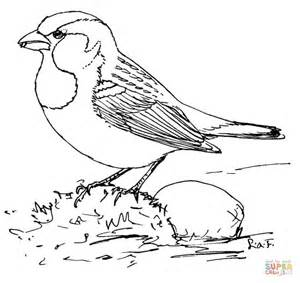 House Sparrow Coloring Page Free Printable Coloring Pages Sparrow Coloring Pages