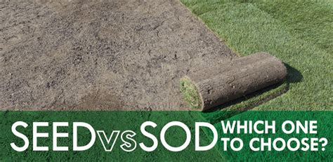 seed vs sod which one to choose