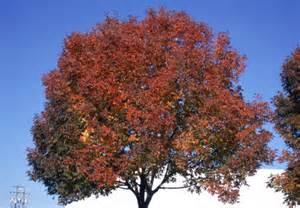 Trees of ohio white ash