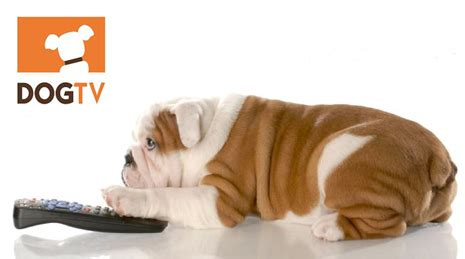 puppy tv directv specific channel available for 5 99 mo in q3