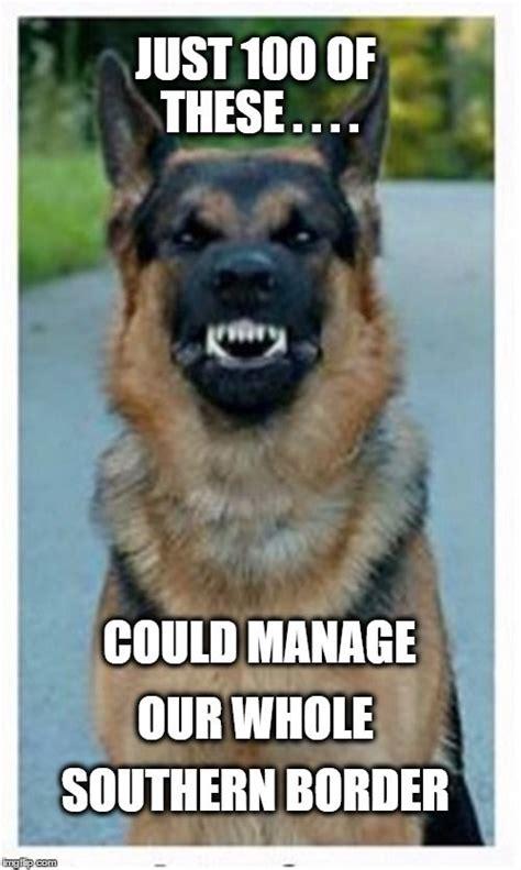 German Shepherd Memes - best 25 german shepherd memes ideas on pinterest police