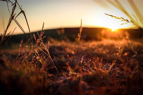 free stock photo of field grass sunrise
