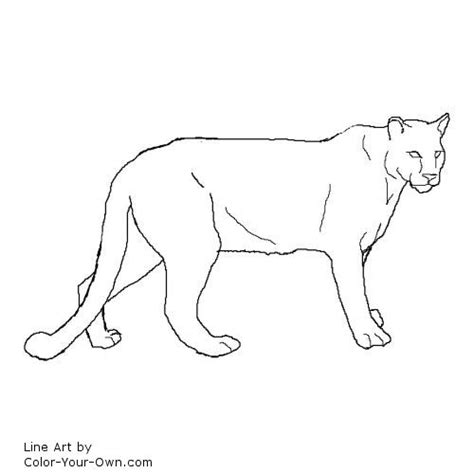 coloring pages mountain lion cougar coloring page