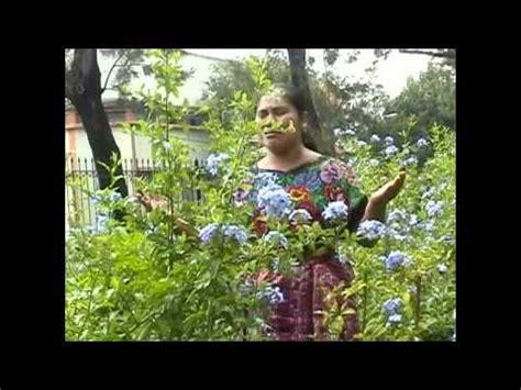cadena de coros nohemi itzol yolanda perez cadena de coros funnycat tv