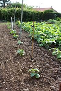 concombres et cornichons semis plantation et r 233 colte au