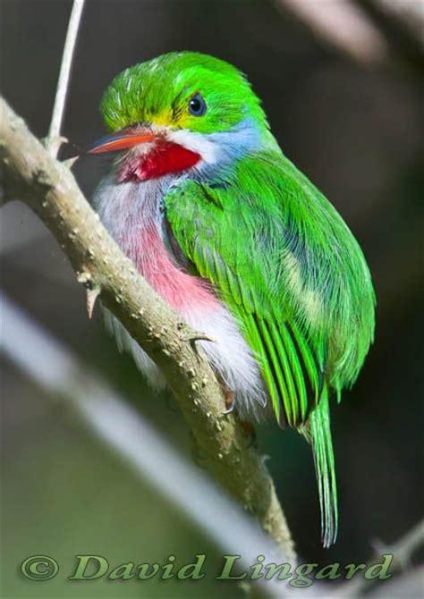 bee hummingbird diet copyinter