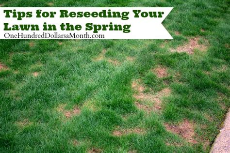 spring landscaping tips tips for reseeding your lawn in the spring one hundred