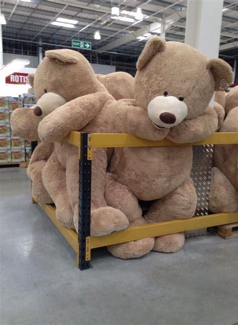 big teddy best 25 big teddy ideas on teddy