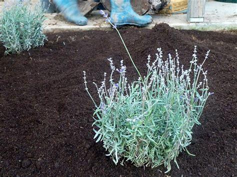 Steer Manure In Vegetable Garden Garden Installation Part Iv Hip Digs