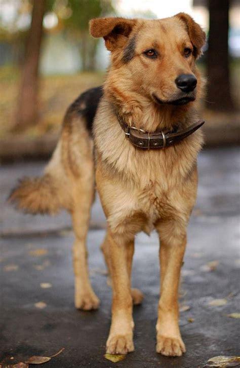 doggylicious 50 wonderful dog pictures