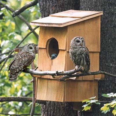 bird feeder designs and plans woodworking projects & plans
