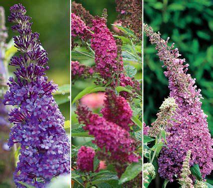 preplanned flower gardens 13 best preplanned gardens images on garden