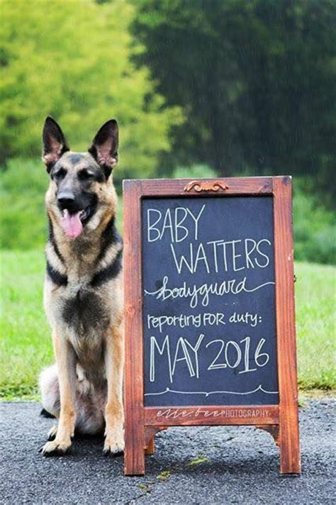 baby announcements with dogs best 25 baby announcements ideas on