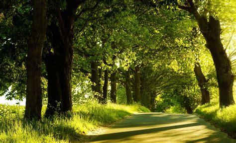 photography landscape trees nature plants summer