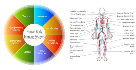 innate immunity a question of balance ora how can i strengthen my immune system naturally