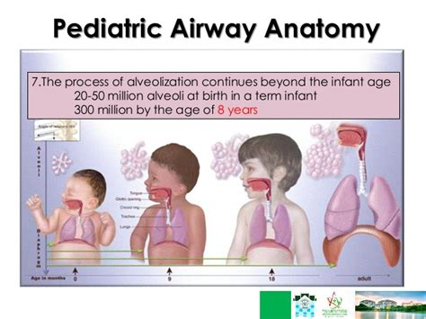 anatomy of a child s lung pediatric pulmonologists respiratory failure ped