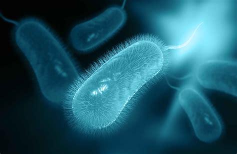 helicobacter im stuhl helicobacter pylori symptome ursachen und behandlung