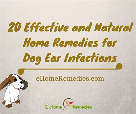 home remedies for dogs 20 effective and home remedies for ear infections