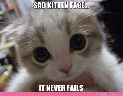 Sad Kitten Meme - sad kitten memes image memes at relatably com