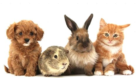 puppies and bunnies puppies guinea pig and kittens and bunnies together wetnaps