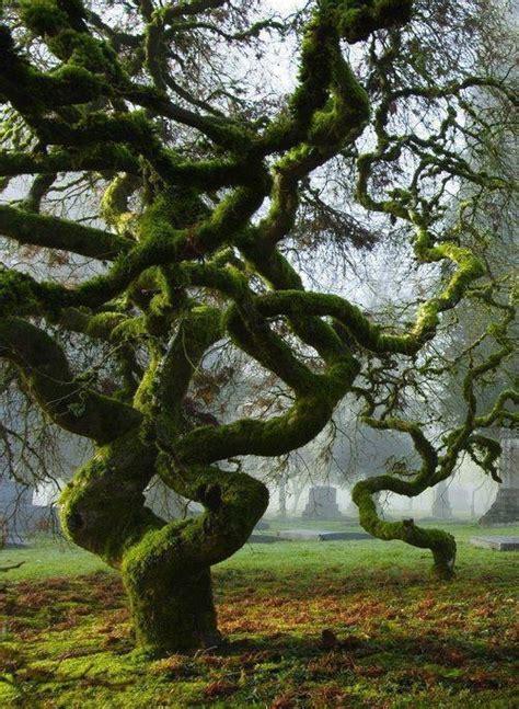 cool trees tree trees