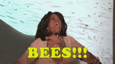 oprah bees! gif find & share on giphy