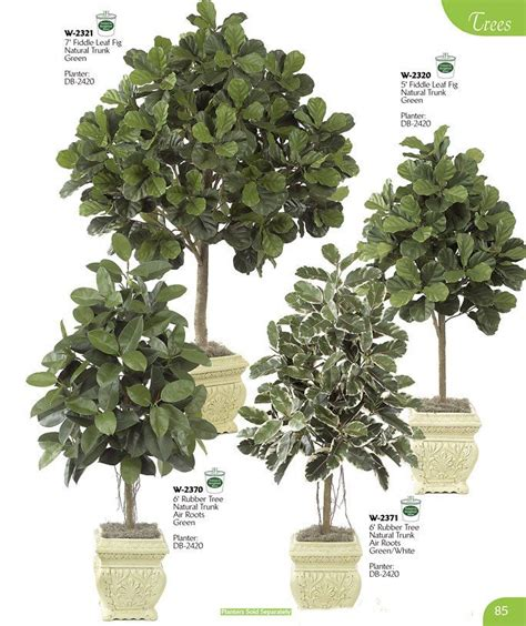 fiddle fig tree fiddle leaf fig tree container gardening trees fiddle leaf fig tree and