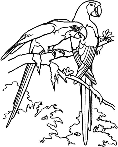 love birds pered her couple coloring pages batch coloring