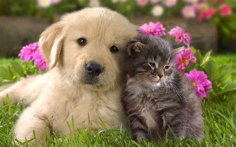 di piacenza home banking amici fedeli 2018 il conto in per cani e gatti i
