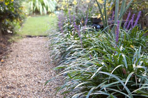 plants  dry shade gardenersworldcom