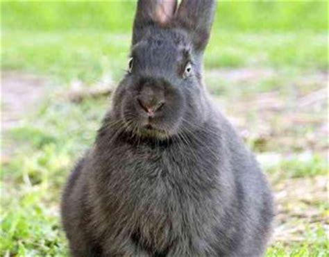 come fare gabbie per conigli come costruire una gabbia per conigli donnad