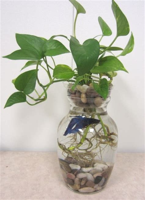Plants In Water Vase by 526 Best Images About Plants On Bamboo House