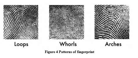 pattern types of fingerprints what are the most common ridge patterns in fingerprints
