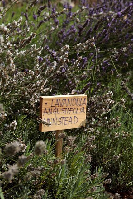 dove trovare i fiori di bach uncategorized migliora la tua vita con aromaterapia e