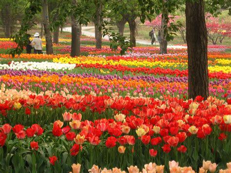 beijing botanical garden garden ftempo