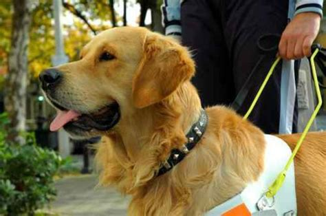service dogs florida service registration becomes a crime in florida