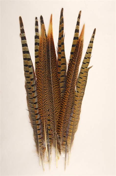 Vase Lighting Ideas 10 Pheasant Tail Feathers 14 18 Inch