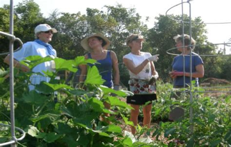 plant a row for the hungry   master gardener volunteers of
