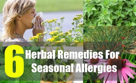 top 6 herbal remedies for seasonal allergies how to