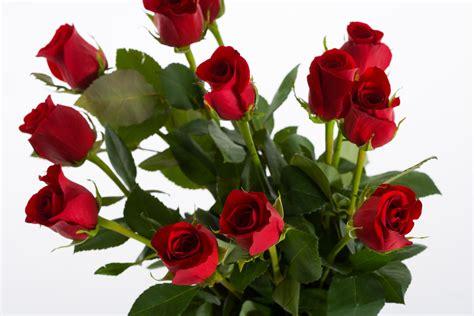 rosas para mama fondos de pantalla dia de las madres tattoo design bild