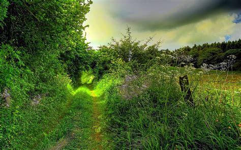 dream spring 2012 spring landscape hd wallpaper 2560 215 1600 dream spring 2012 green path wallpapers hd wallpapers