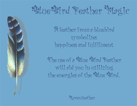 17 Best Images About C To M Birds Feathers On Feathers Meanings