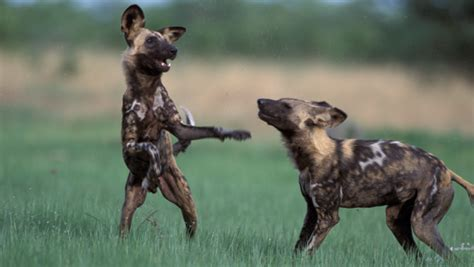 who painted dogs painted conservation income made smart