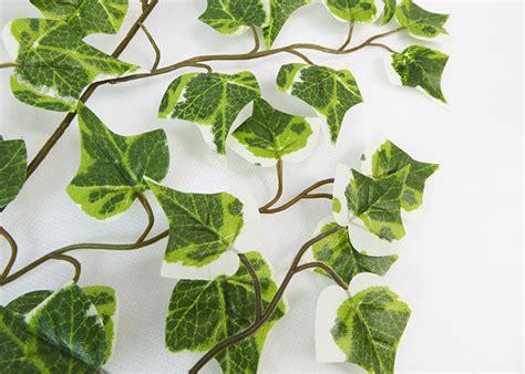 piante da arredamento piante da arredamento with piante da arredamento piante