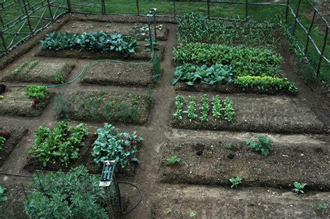 Gardening Albertsons Easy Steps To Start A Vegetable