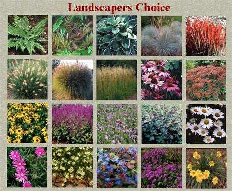 Landscapers Choice Quot Growing For You Quot