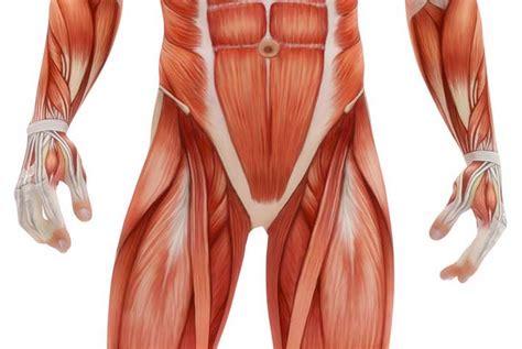 dolore interno coscia inguine pi 249 vivi salute e benessere alimentazione sana